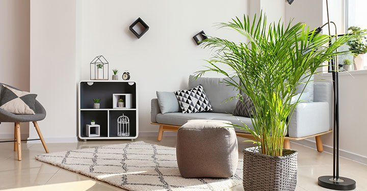 10 Best Air Purifying Indoor Plants For Your Home