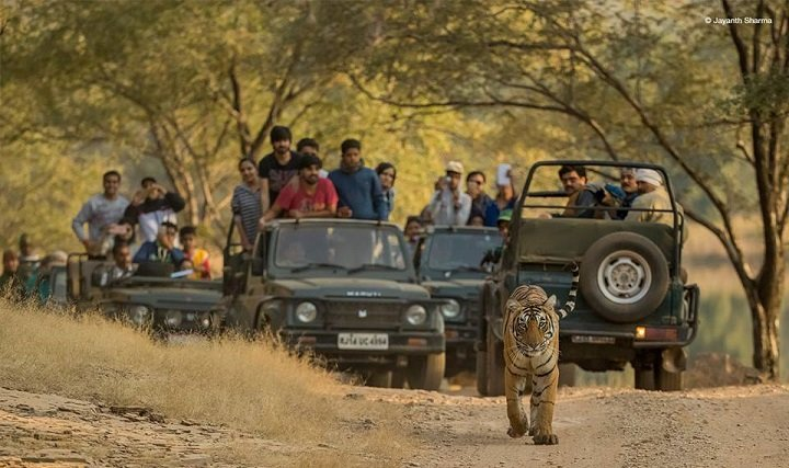 10 Best Places To Spot Tigers In India With Your Family
