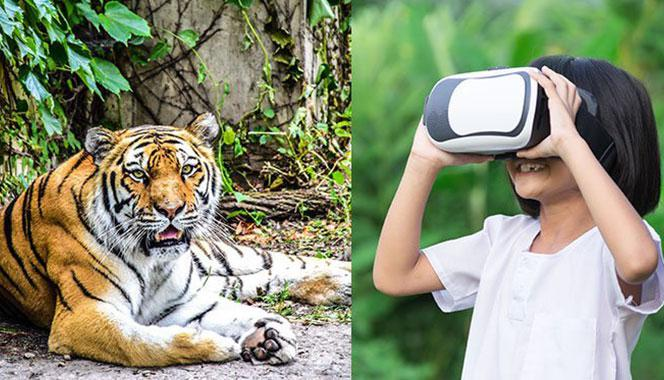 Fancy seeing a tiger up close and personal! It may not be impossible with these virtual zoo tour for kids