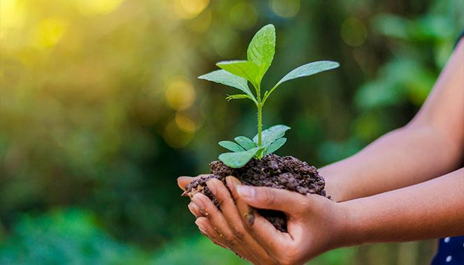 Looking for ways to celebrate World Environment Day with your child? Try these 8 eco-friendly activities
