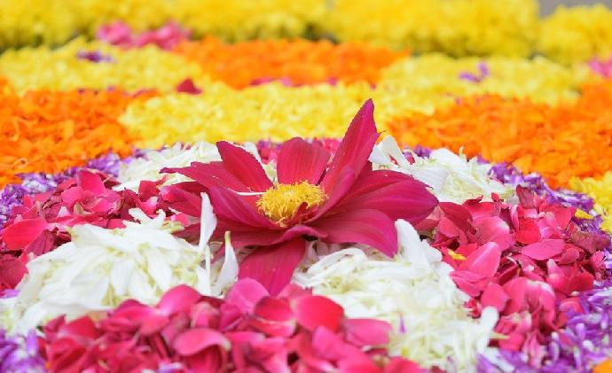 The festival of flower carpets or pookalam: Know what 10 days of Onam signify