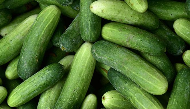 This is why cucumber should be a part of your family's diet. Find out about its health benefits and nutritional facts