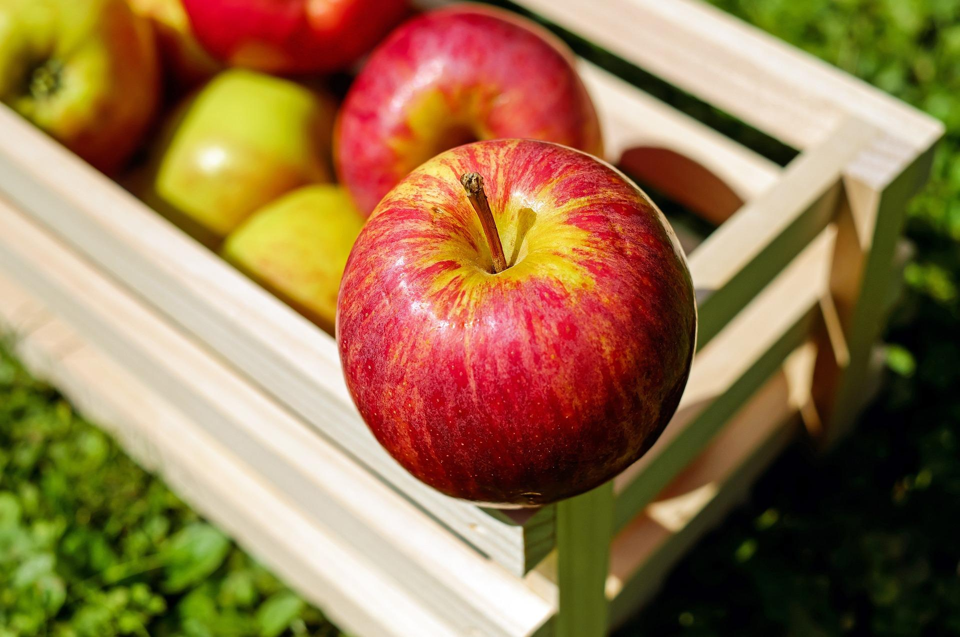 Top 5 Healthy Fruits For Your Toddler