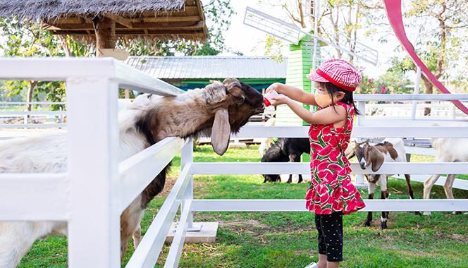 Why A Visit To A Farm Is The Best Outing For Your Child